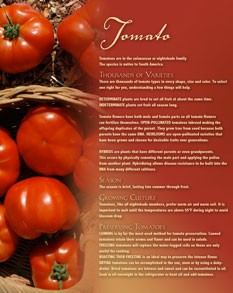 MG Tomato Recipes