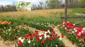 Organic Community Garden