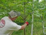 pruning-whirls