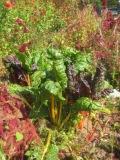 0914-vegetable1