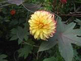 0914-yellow-flower