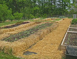 raised-beds-1