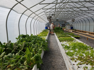 Tangy Produce Greenhouse