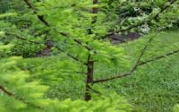 0518-James Dillons Garden 3