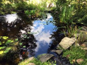 Priscilla's Pond
