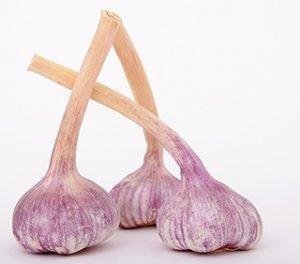 Hardneck Garlic @ Home of Jane Blash